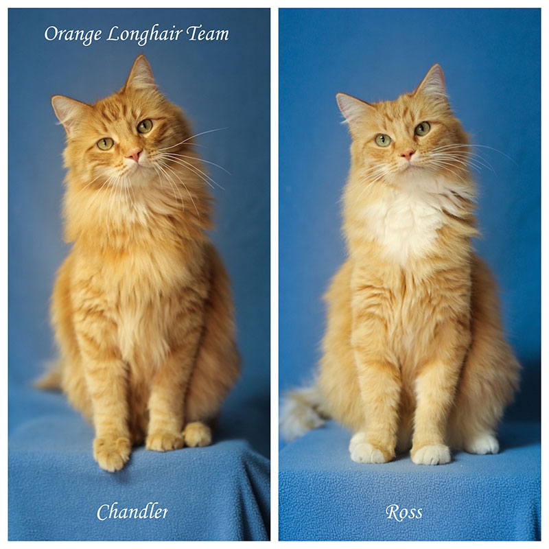Orange LongHair Team