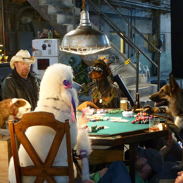 Dogs Play poker